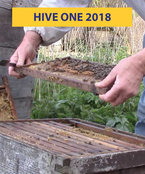 Hive one 2018