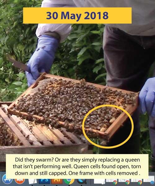 Inspection 21st April 2018