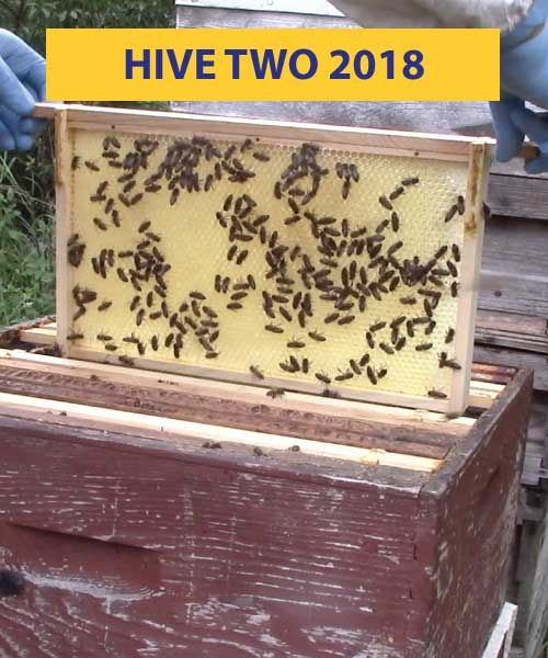 Hive two 2018