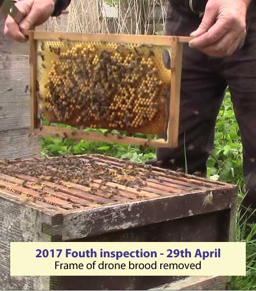 Fouth inspection 29th April drone brood removed