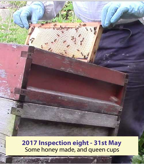 Inspection eight