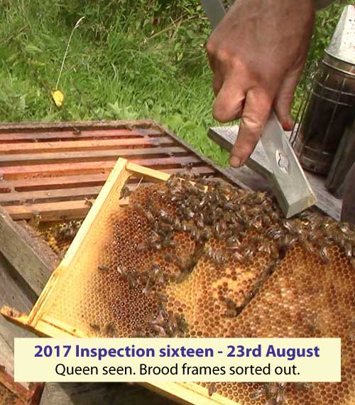 Inspection sixteen. Umarked queen seen. Brood frames sorted out